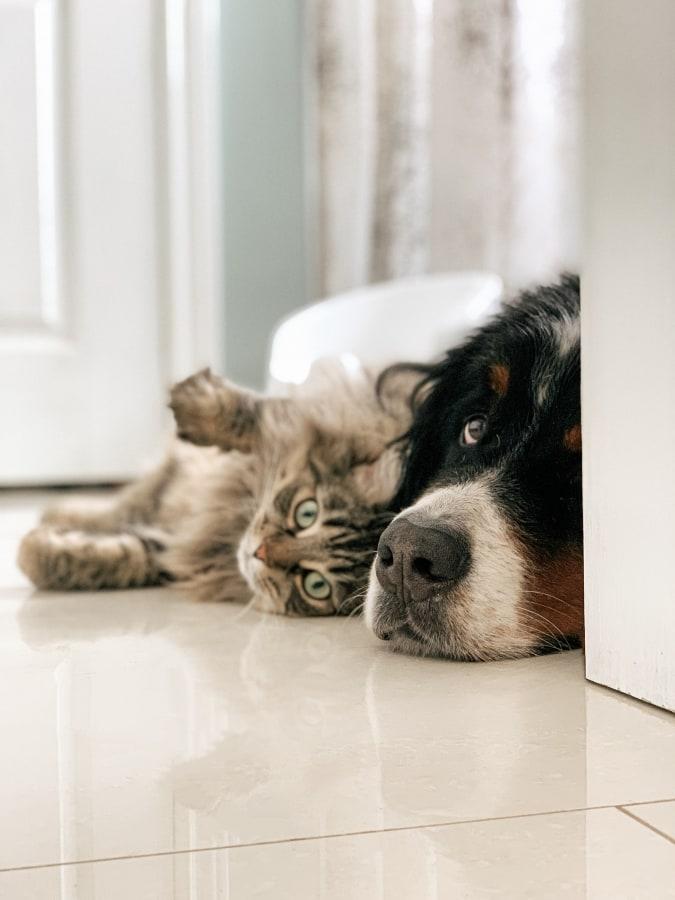 Evcil Hayvan Temizliği
